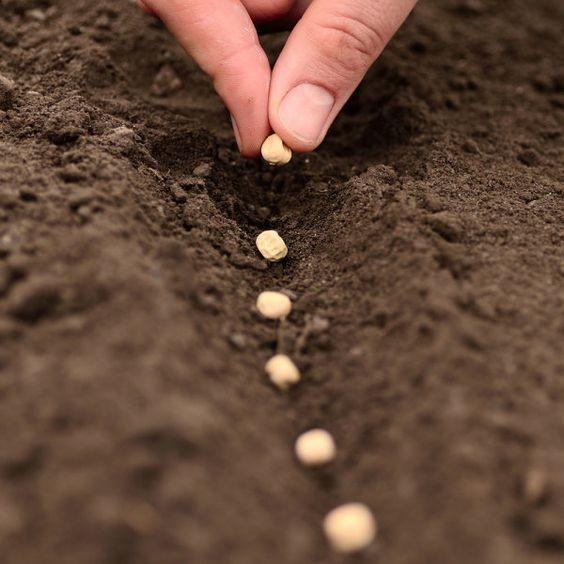 «Semer pour récolter», les valeurs patience et travail à l'honneur
